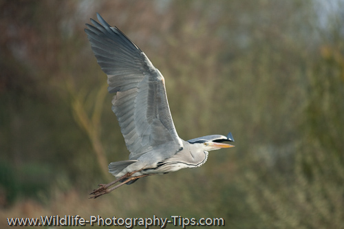 Heron using single focus point